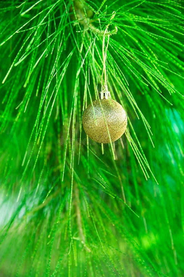 Золотая смертная казнь через повешение шарика рождественской елки на зеленой естественной серебряной ветви ели Плакат поздравител стоковая фотография