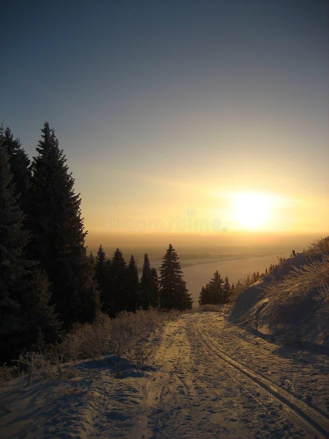 золотистая зима солнца стоковое изображение rf