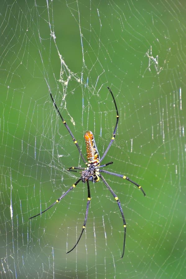 золотистая сеть паука шара стоковое изображение