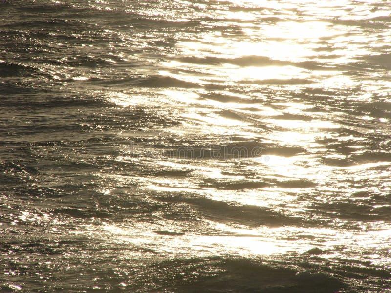 золотистое море стоковые фотографии rf