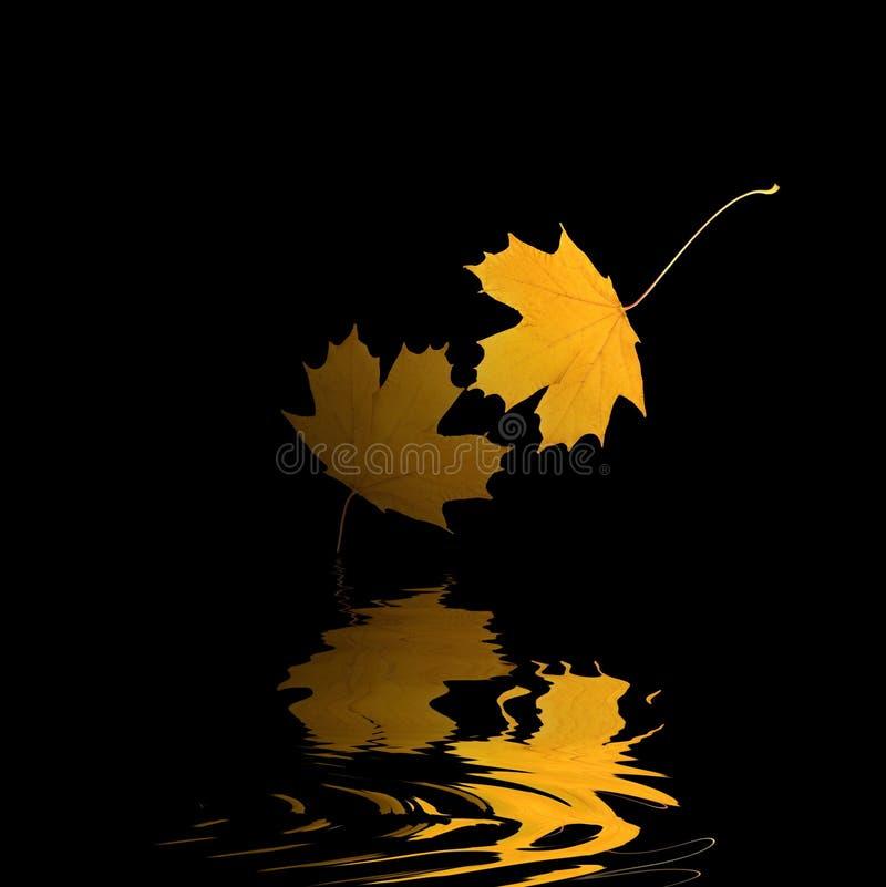 Download золотистое отражение листьев Стоковое Изображение RF - изображение: 4552956