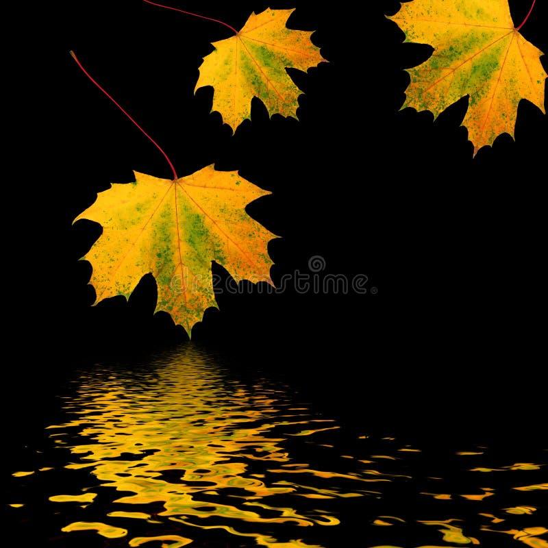 золотистое трио листьев стоковые фотографии rf
