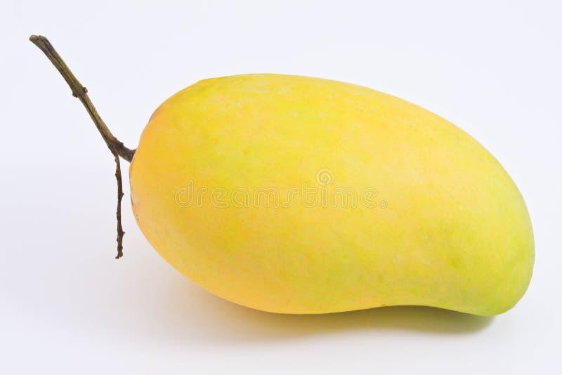 золотистое mangoe стоковые изображения