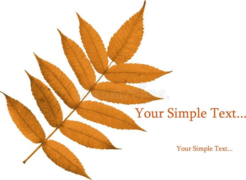 Золотистые листья осени стоковые фото