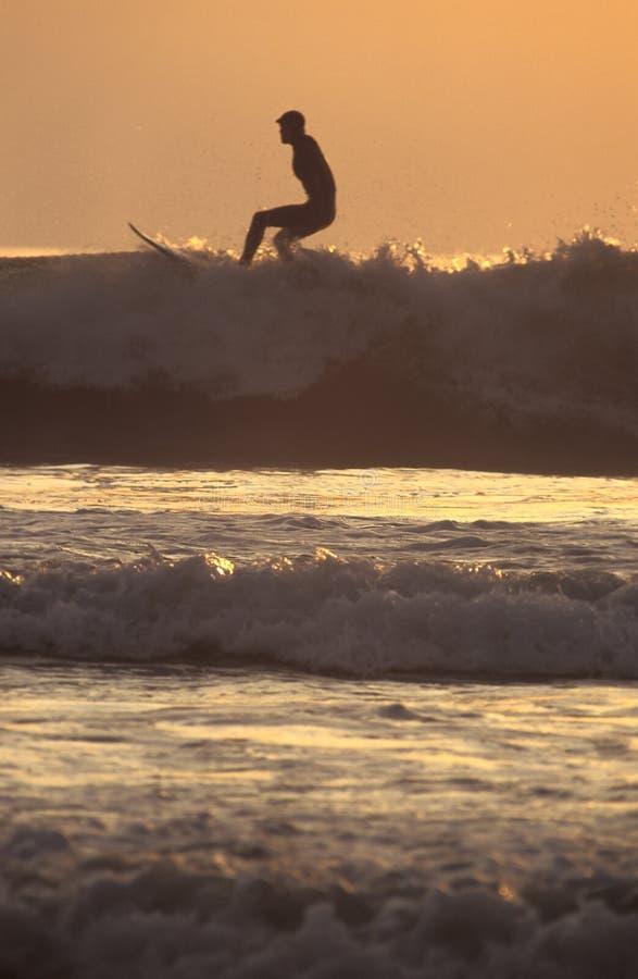 золотистый заниматься серфингом стоковые фото