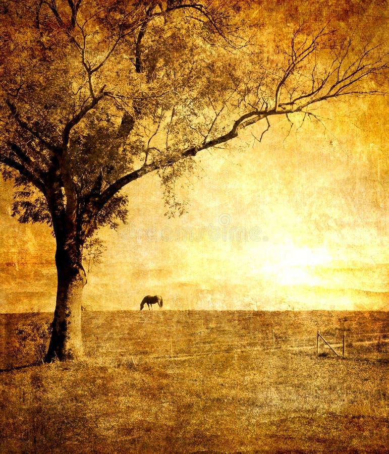 золотистый заход солнца бесплатная иллюстрация
