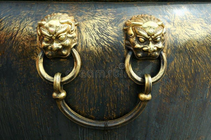 золотистый львев стоковые фотографии rf