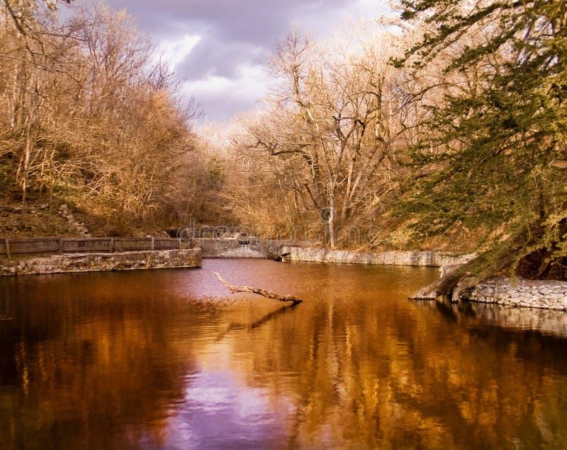 золотистый пруд стоковые фото