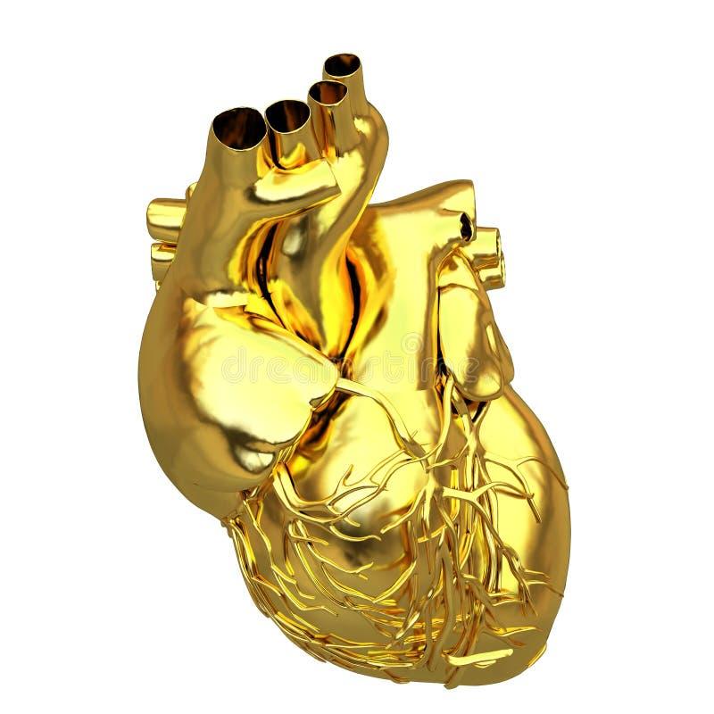Золотое анатомическое сердце иллюстрация штока