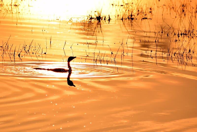 Золотое зарево в восходе солнца стоковая фотография