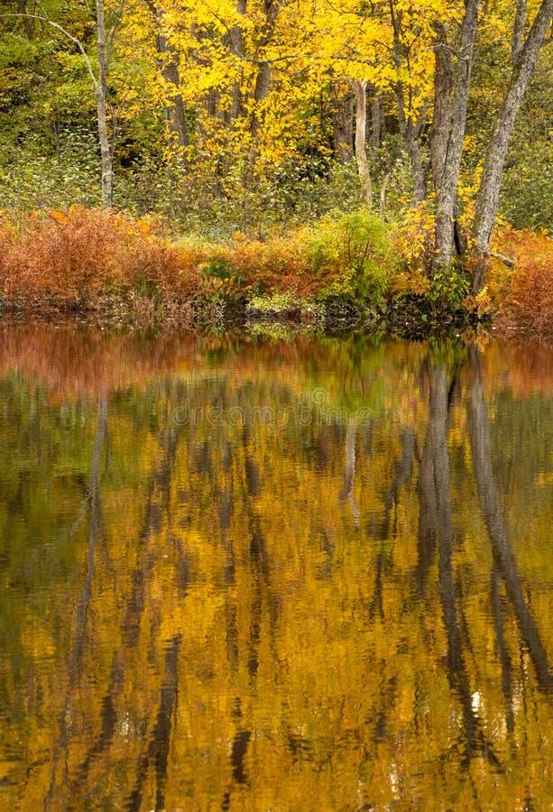 Золотое река Muskoka Rosseau стоковые изображения rf