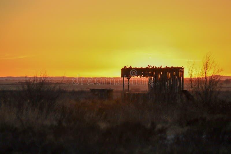 Золотой желтый заход солнца с злаковиком стоковое фото