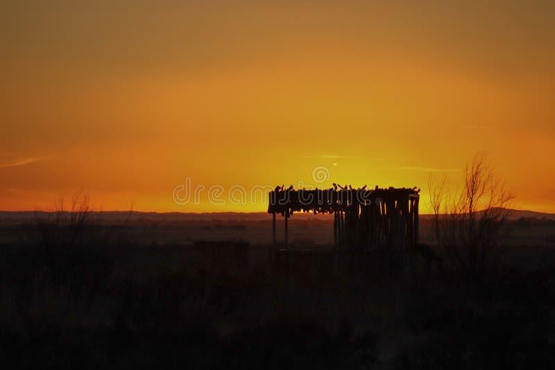 Золотой желтый заход солнца с злаковиком стоковые фотографии rf