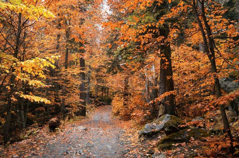 Золотой лес осени стоковое изображение