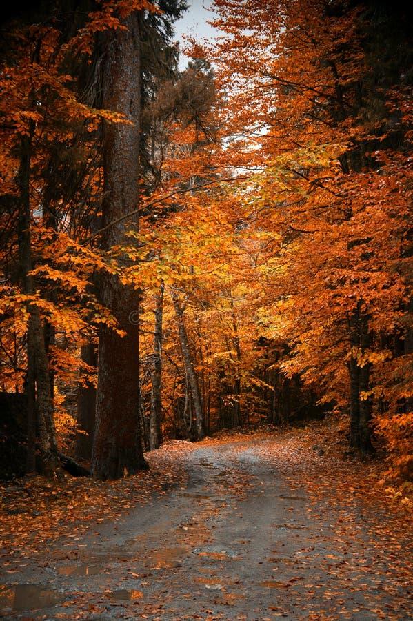 Золотой лес осени стоковая фотография