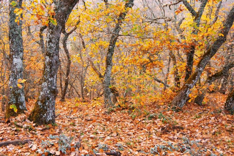 Золотой лес осени стоковое фото rf