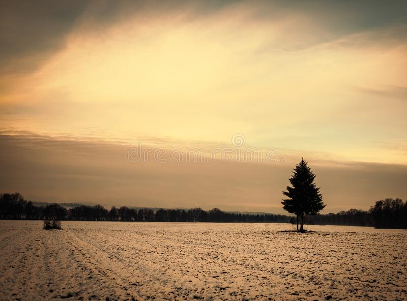 Золотой пасмурный заход солнца на снежном поле с одиночным деревом в европейских горных вершинах на холодный день в зиме стоковое фото rf