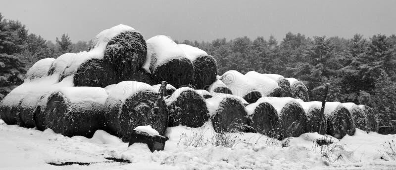 Золотой сено в снегу покрыто стоковое фото