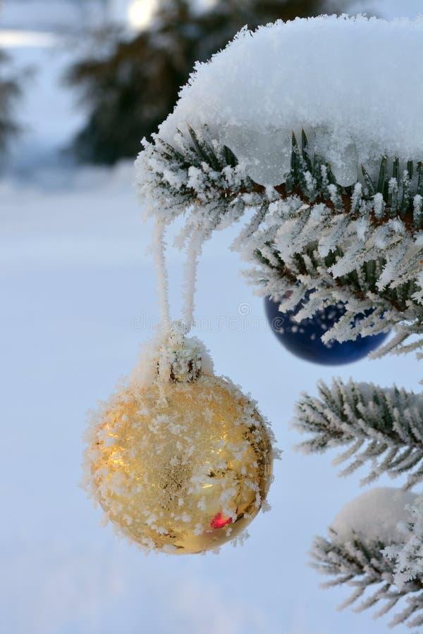 Золотой шарик Нового Года на ели в реальном маштабе времени с заморозком и снегом стоковые фото