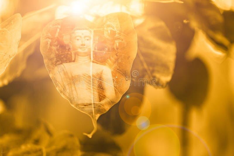 Золото лист Будды и Bodhi стоковая фотография rf
