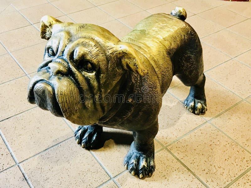 Золото собаки стоковые фото