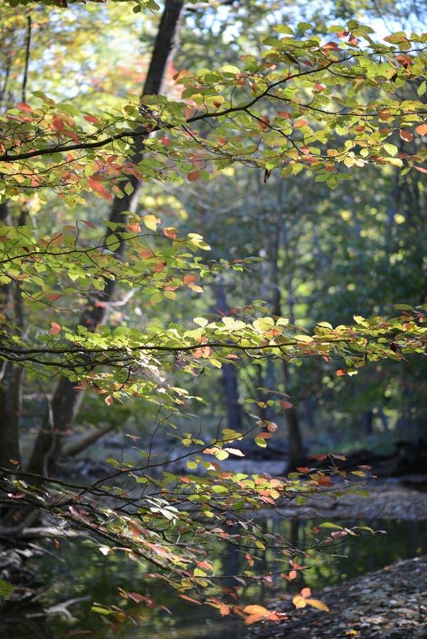 Золотые и красные листья осени украшают Кливленд MetroParks стоковое фото