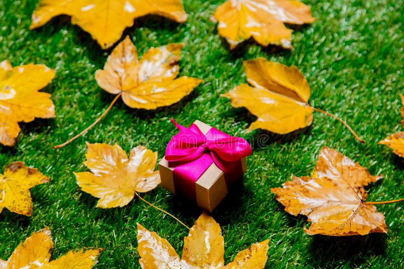 Золотые кленовые листы и подарочная коробка осени стоковые изображения