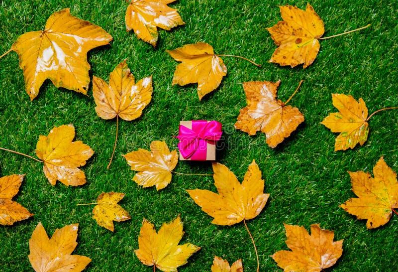 Золотые кленовые листы и подарочная коробка осени стоковые изображения rf