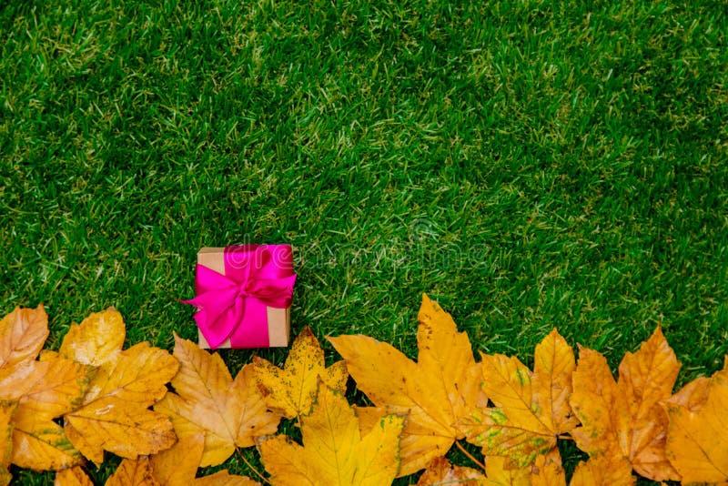 Золотые кленовые листы и подарочная коробка осени стоковая фотография