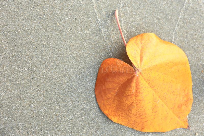 Золотые листья на сером песке стоковые фотографии rf
