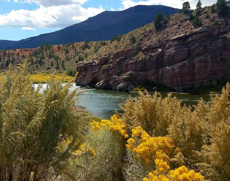 Золотые осины выравнивая берег реки стоковые изображения rf