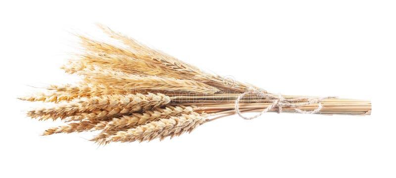 Золотые уши пшениц-рож изолированные на белизне стоковые фото