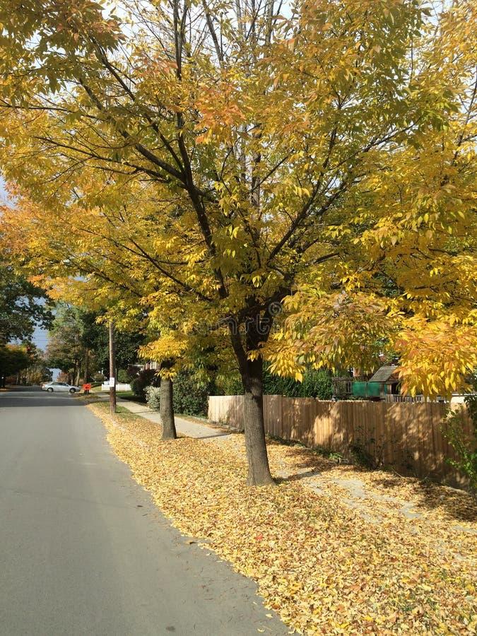 Золотые цвета падения в северной части штата Нью-Йорке стоковая фотография
