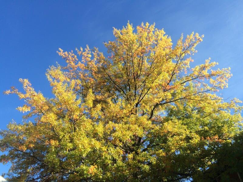 Золотые цвета падения в северной части штата Нью-Йорке стоковое изображение