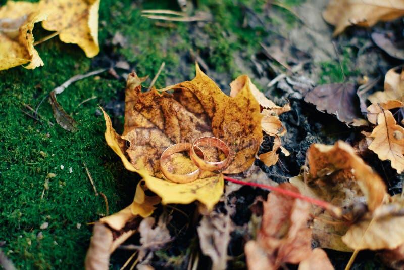 Золотые bridal обручальные кольца на мхе и листьях осени стоковые фото