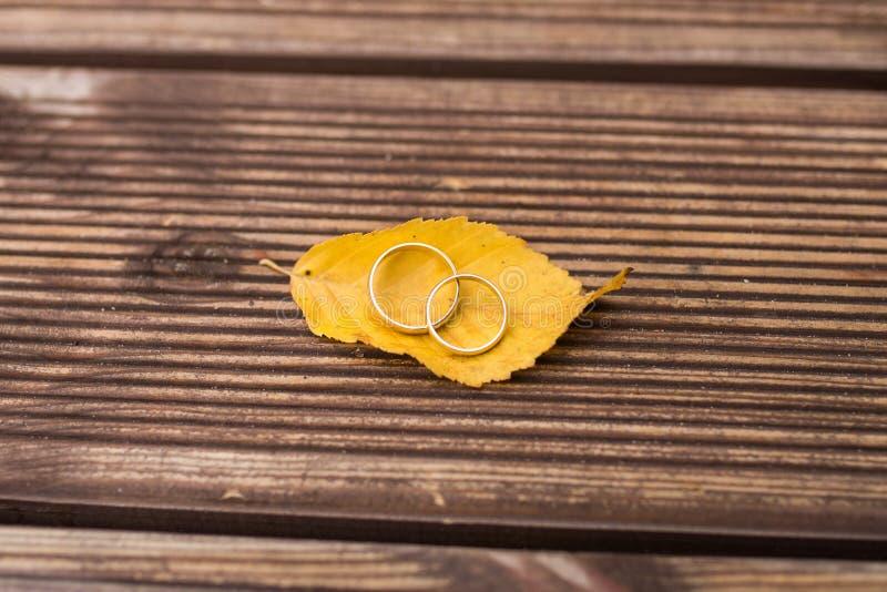2 золотых обручального кольца лежат на желтых лист осени стоковая фотография