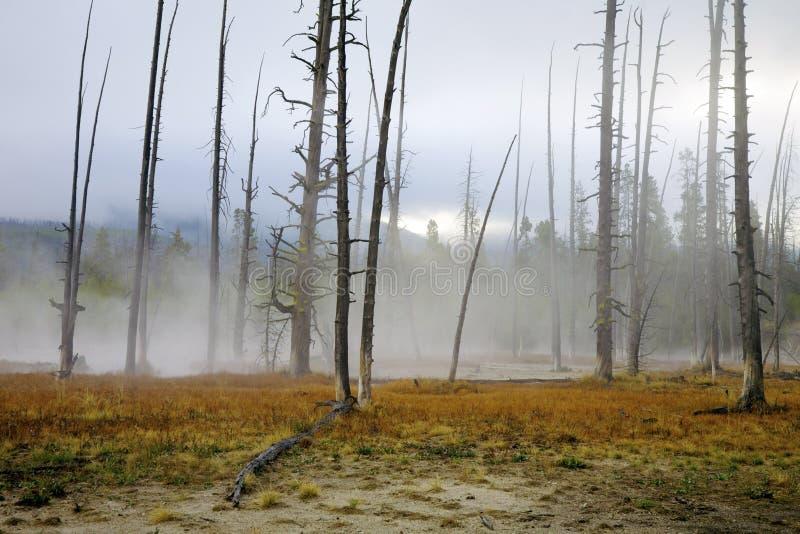 зона геотермический yellowstone стоковая фотография
