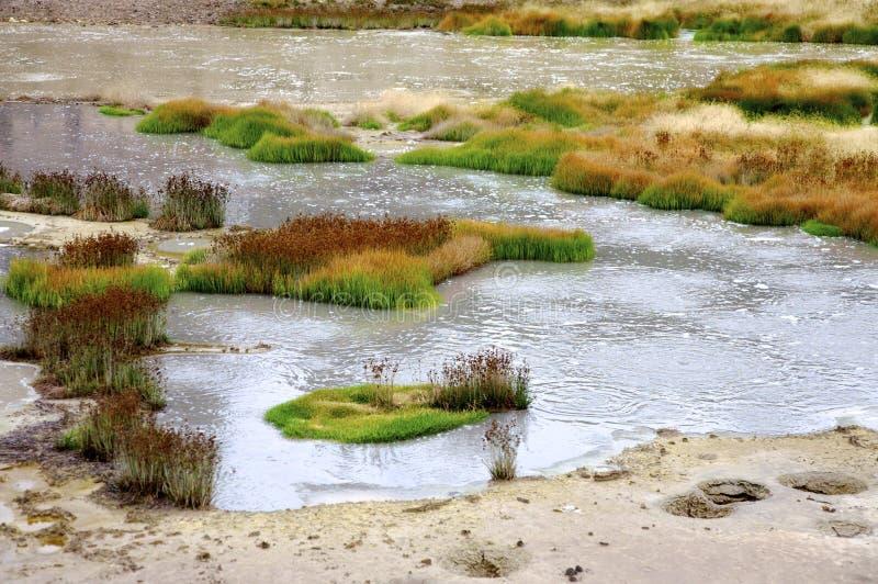 зона геотермический yellowstone стоковые фото