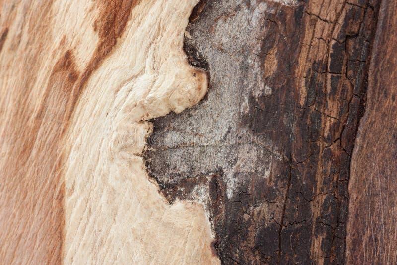 Зона дерева без расшивы показывая красочные тени древесины, скачками формы, начало распадать дерево стоковые изображения