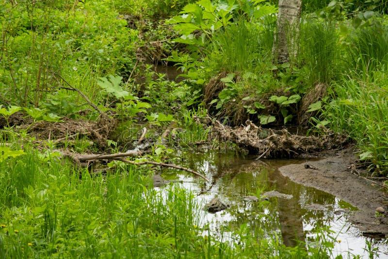 Зона лета парка landscapepicnic, пути, река стоковые изображения