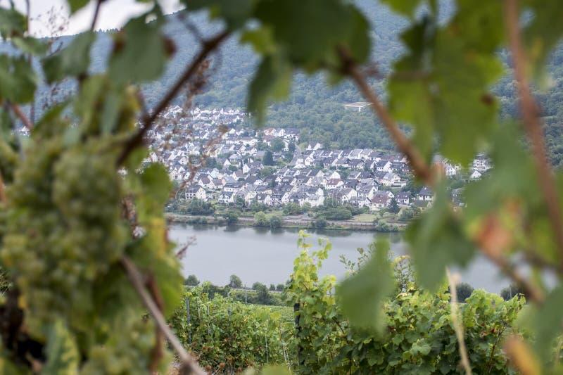 Зона Мозель Winningen 14 виноградин белого вина стоковое изображение rf