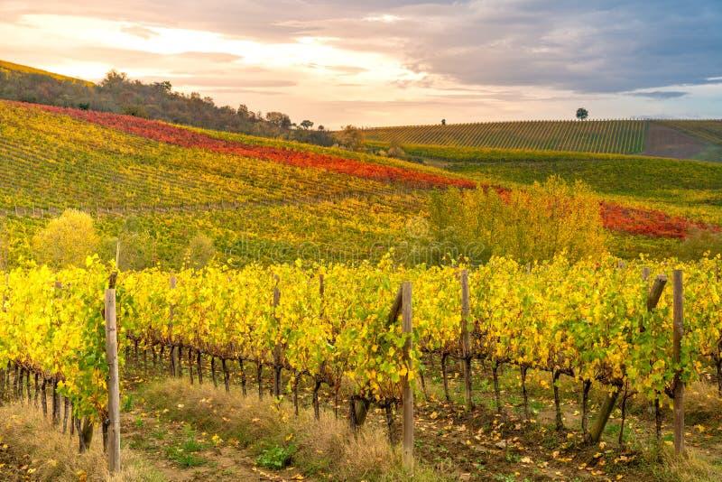 Зона Chianti, Тоскана, Италия Виноградники в осени стоковые фото