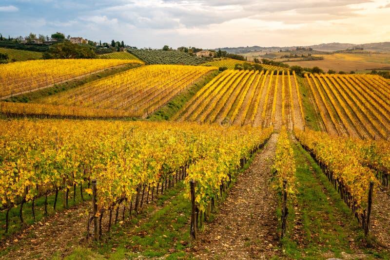 Зона Chianti, Тоскана, Италия Виноградники в осени стоковое фото