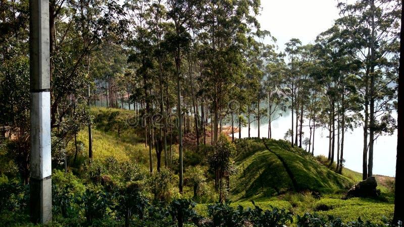 Зона Mountian в Шри-Ланка стоковые изображения rf