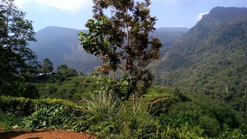 Зона Mountian в Шри-Ланка стоковые фотографии rf