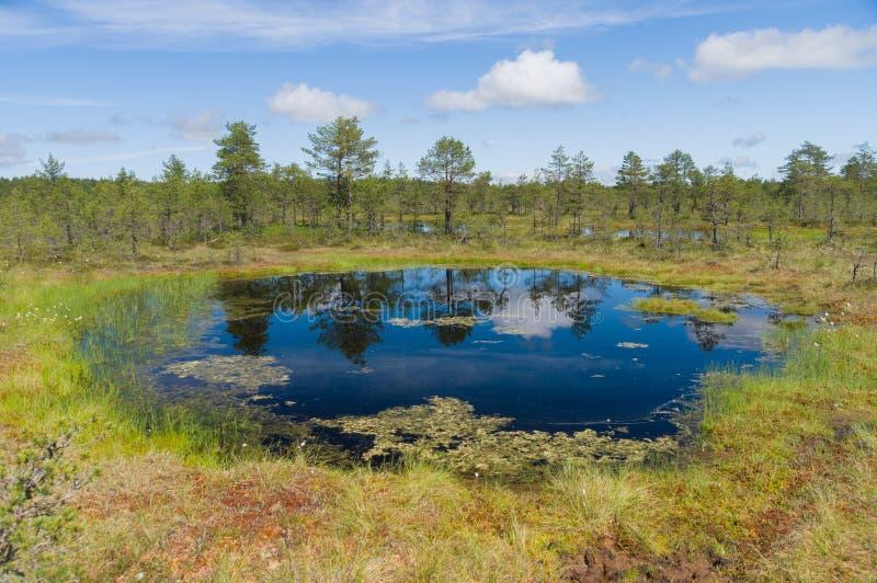 Зона Muskeg, отражение на воде стоковые фотографии rf