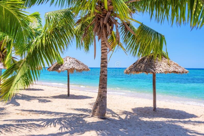 Зонтики и пальмы соломы на тропическом пляже стоковое фото