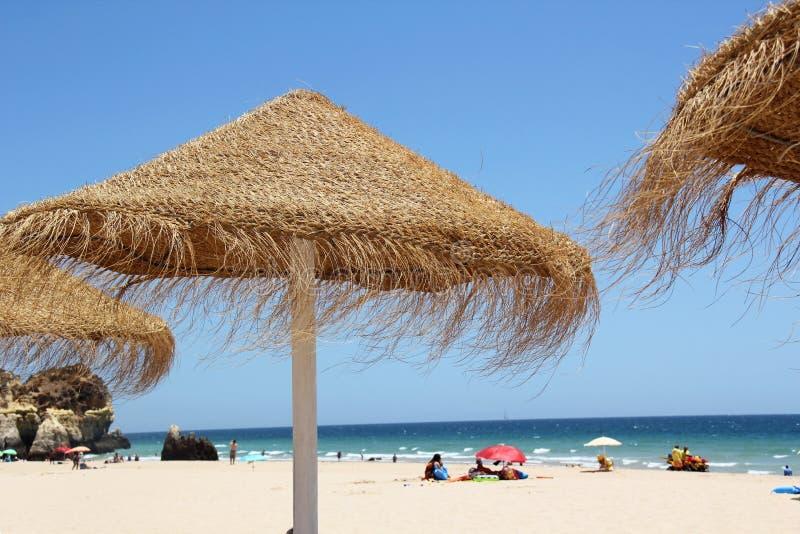 Зонтики сторновки на пляже стоковые изображения rf