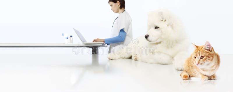 Зооветеринарная концепция ветеринарный доктор, собака и кошка в offi ветеринара стоковые изображения