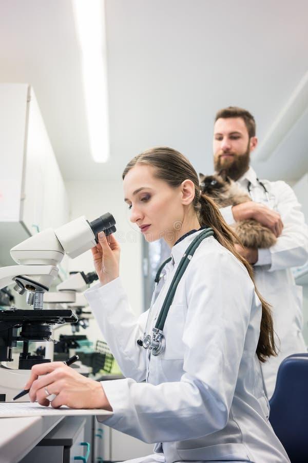 Зооветеринарные доктора анализируя пробы крови кота в микроскопе стоковое фото rf